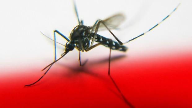 Encuentran-componente-genético-que-explica-por-qué-alguien-atrae-más-a-los-mosquitos-960x623