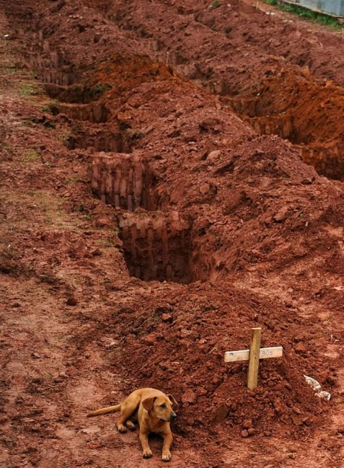 Un perro llamado Leao se sienta por segundo día consecutivo en la tumba de su dueño, que murió en los deslizamientos desastrosos cerca de Río de Janeiro en 2011