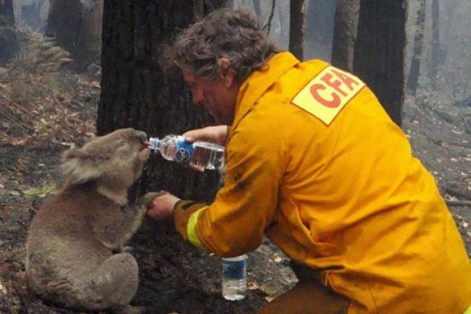 Un bombero da agua a un koala durante los devastadores incendios forestales del Sábado Negro en Victoria, Australia, en 2009